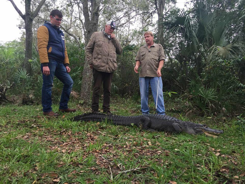Der Knochenbrecher Tamme Hanken (M.) und sein Lehrling Anton (l.) gehen nicht nur mit Kapitän Rick (r.) auf eine Tour durch die Everglades, sondern... - Bildquelle: kabel eins