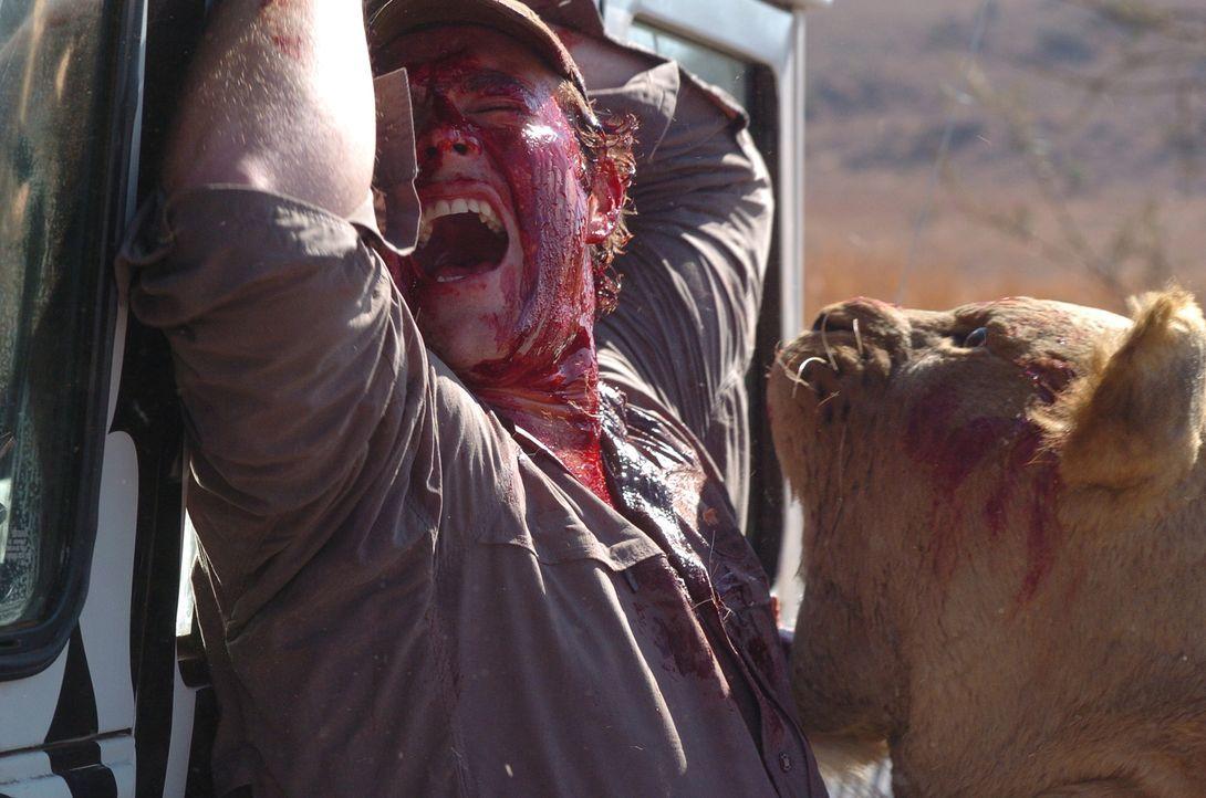 Als der junge Ranger Brian (Marius Roberts) mit dem kleinen David den sicheren Jeep verlässt, gerät er mitten in eine hungrige Löwenmeute, die sich...