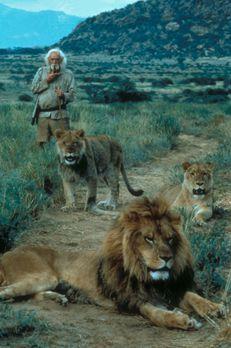 """To Walk with Lions - Jagd in Afrika - Löwin Elsa und """"Herrchen"""" Geo..."""