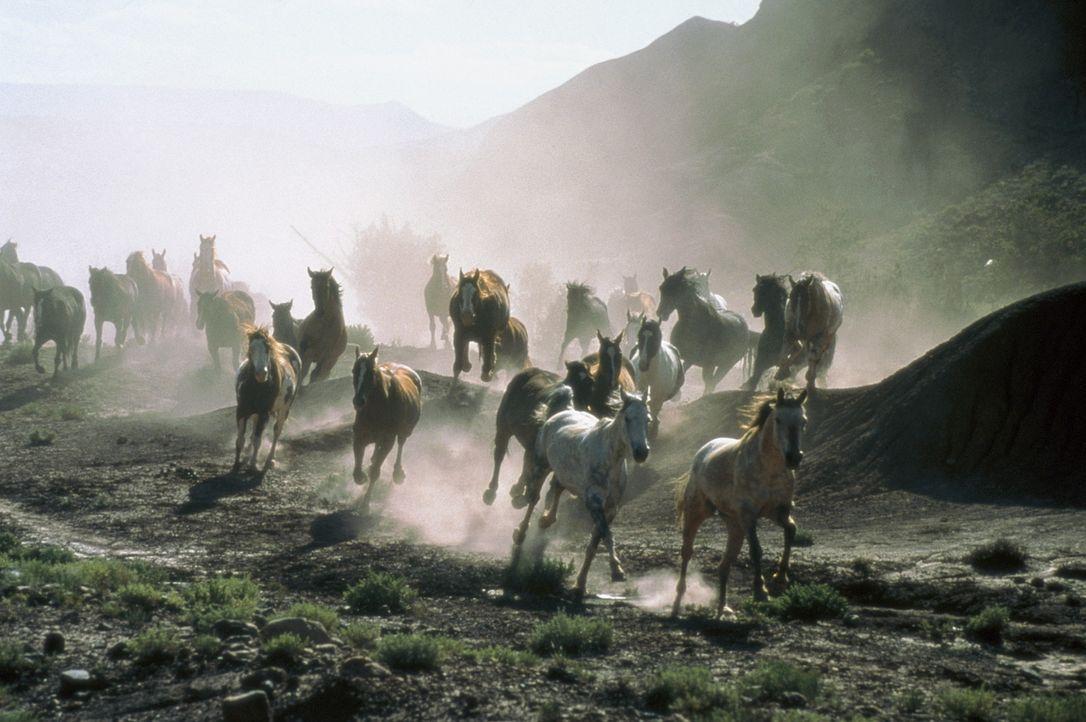 All die schönen Pferde ... - Bildquelle: Sony Pictures Entertainment