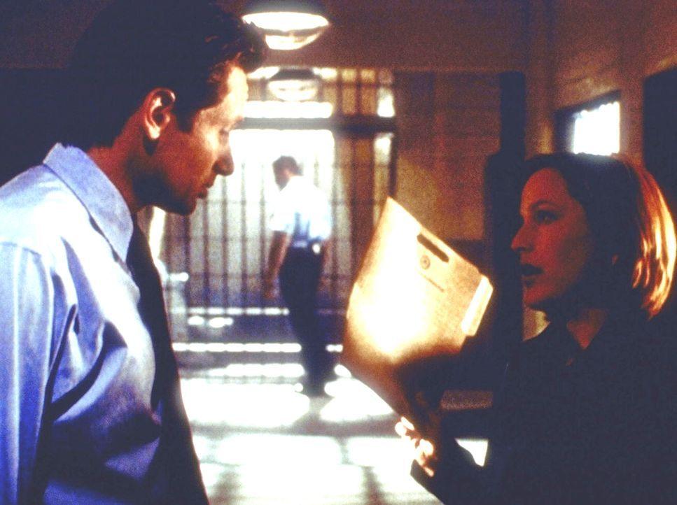 Im Manuskript des noch unfertigen Romans eines jungen Autors finden Scully (Gillian Anderson, r.) und Mulder (David Duchovny) alle Morde, die sie ge... - Bildquelle: TM +   2000 Twentieth Century Fox Film Corporation. All Rights Reserved.