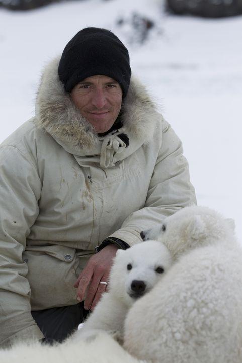 Als stiller Gefährte der Eisbärenmama Lyra und ihren Jungen Miki und Luca, kommt Gordon Buchanan den Tieren so nah wie noch nie jemand vor ihm ... - Bildquelle: Jason Robertsc