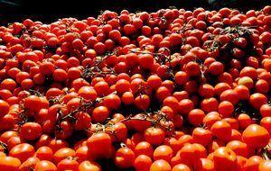 tomaten-allgemein-dpa