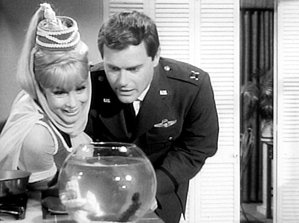 Jeannie (Barbara Eden, l.) hat Besuch von ihrer Tante Fatima. Da diese dauernd redet und Tony (Larry Hagman, r.) stören würde, hat Jeannie sie als G... - Bildquelle: Columbia Pictures