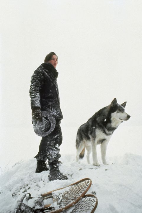 Einsam in der Schneehölle Alaskas: Jack (Ethan Hawke) und sein Wolf Wolfsblut ... - Bildquelle: Walt Disney Pictures