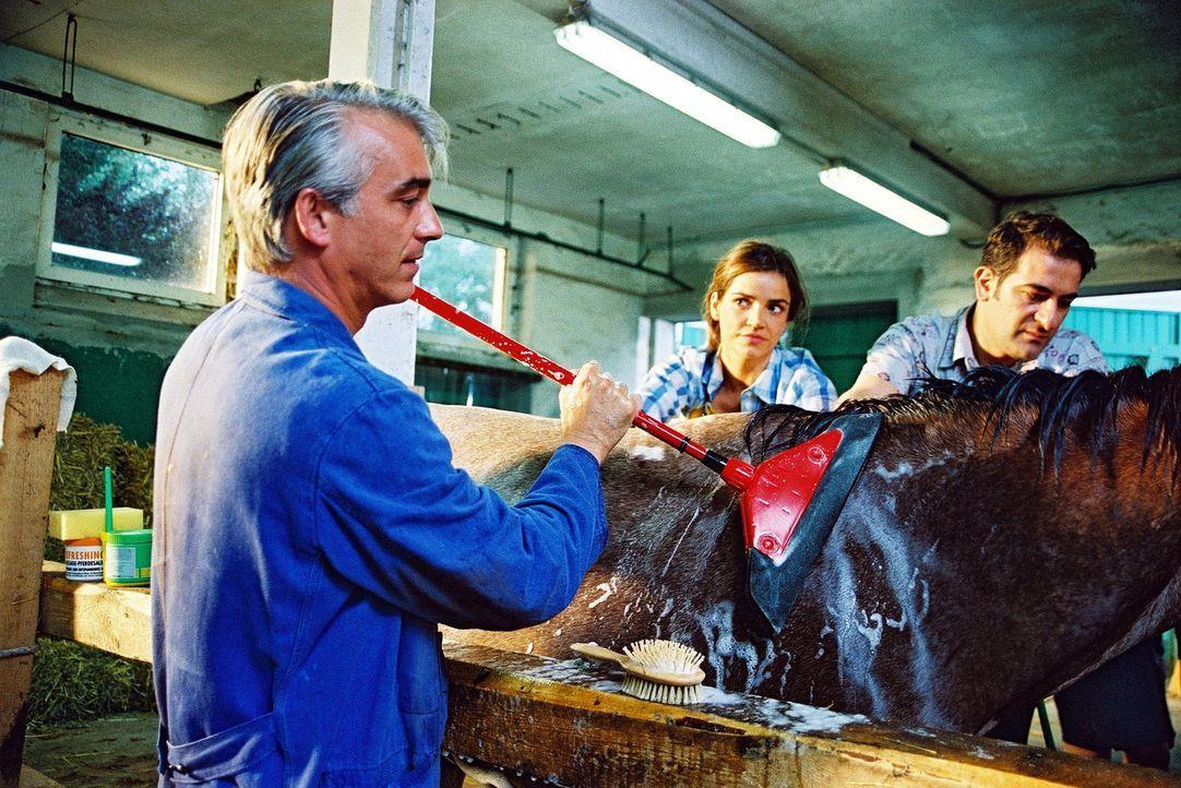 Felix (Christoph M. Ohrt, l.), Sandra (Rebecca Immanuel, M.) und Otto (Hasan Ali Mete, r.) versuchen, aus dem Ackergaul ein richtig schönes Pferd zu... - Bildquelle: Hardy Spitz Sat.1
