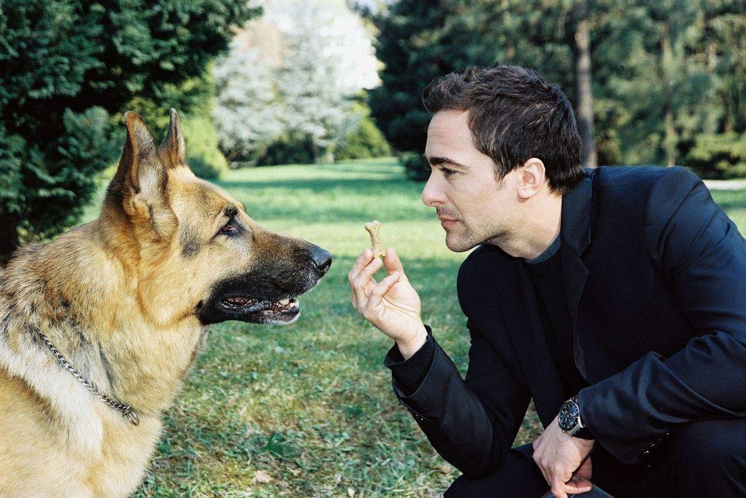 In einem Park wurden vergiftete Hundekekse ausgestreut und ein kleiner Hund ist daran gestorben. Marc (Alexander Pschill, r.) und Rex machen sich au... - Bildquelle: Ali Schafler Sat.1