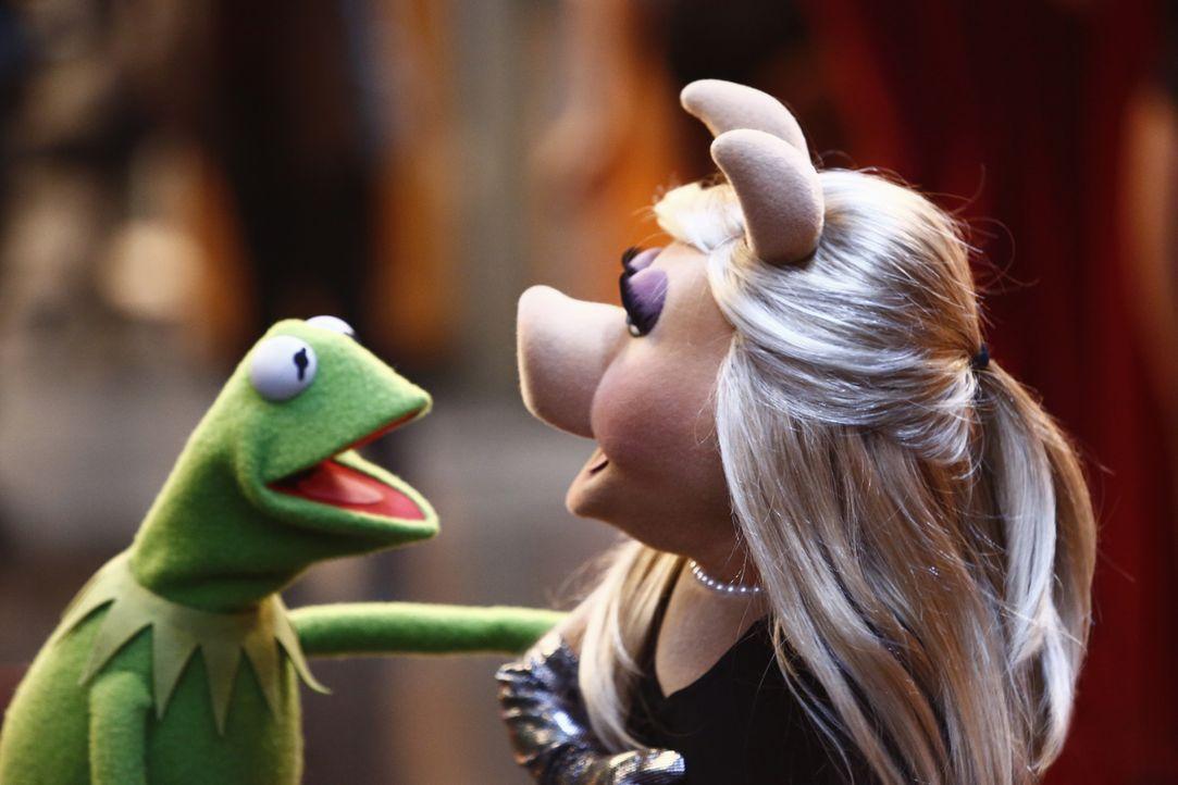 Nachdem sich Miss Piggy (r.) ein Bein gebrochen hat, muss Kermit (l.) alles geben, damit er sie ins Krankenhaus bekommt ... - Bildquelle: ABC Studios