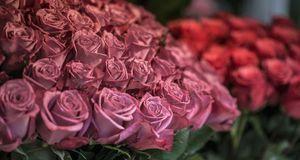 Pastellfarbene Rosen – kaum etwas versprüht mehr romantischen Charme.