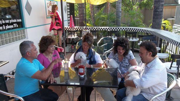 Brauchen dringend Cesars (l.) Hilfe: (v.l.n.r.) Patti, Jori, Joanne und Takis...