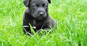 Hund süß Pixabay