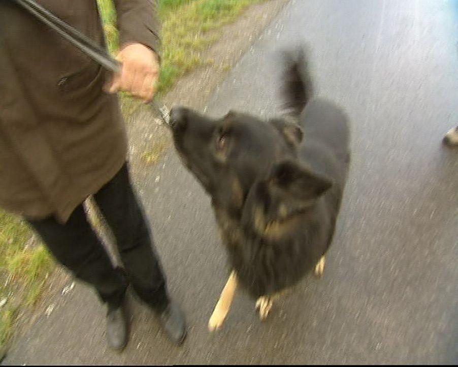 Familie Kosanke hat Probleme mit ihrem Hund (Bild). Da kann nur eine helfen: Hundetherapeutin Stefanie ... - Bildquelle: SAT.1 Gold