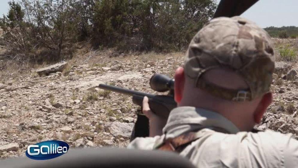 Safarijagd in Texas
