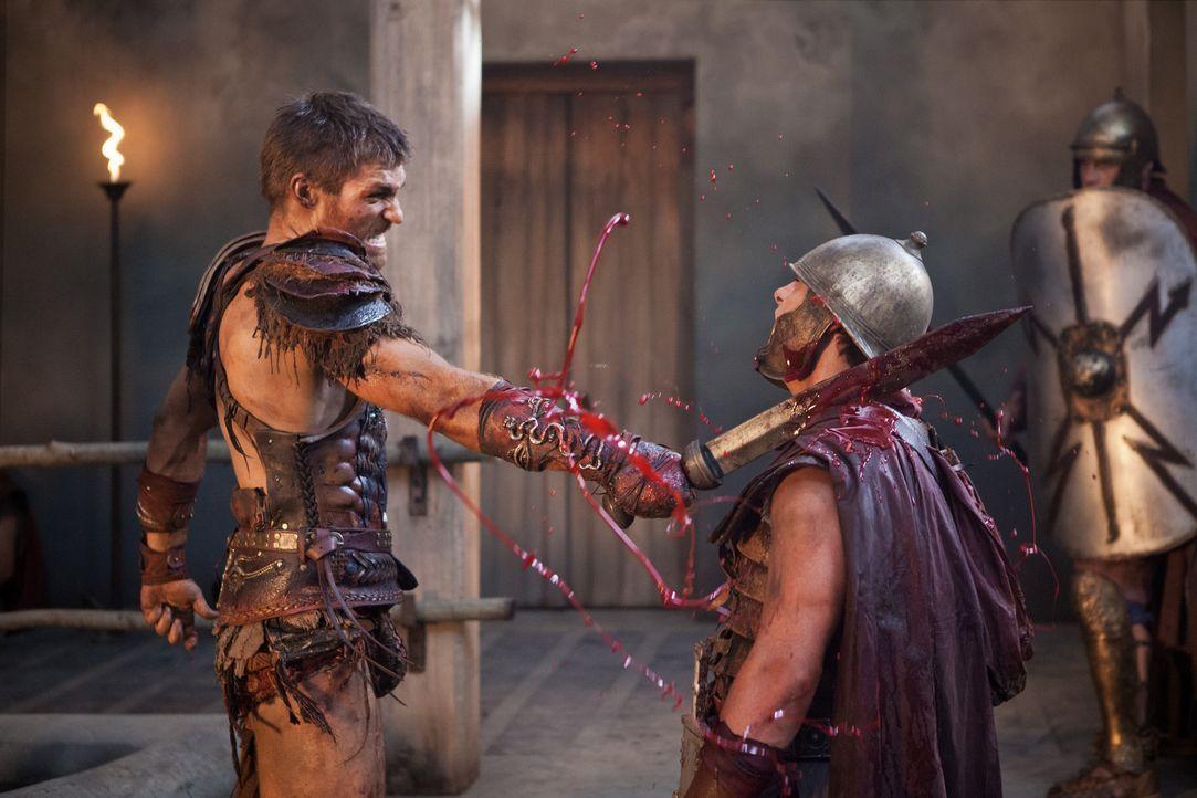 Ein Barbar rastet aus: Spartacus (Liam McIntyre) lehrt die Römer das Fürchten ... - Bildquelle: 2013 Starz Entertainment, LLC.  All Rights Reserved