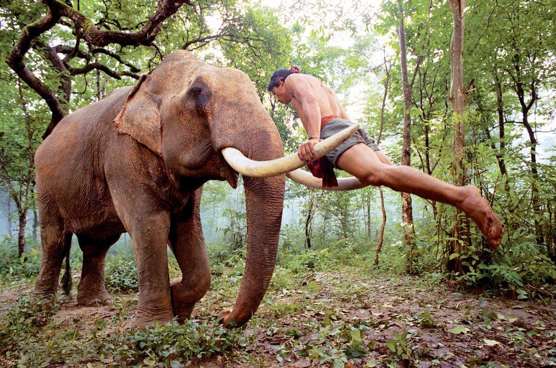 """Für Kham (Tony Jaa) sind die Elefanten in seinem Dorf mehr als nur Spielgefährten. Klar, dass er alles daran setzt, seine """"Freunde"""" aus der Hand der... - Bildquelle: e-m-s the DVD-Company"""
