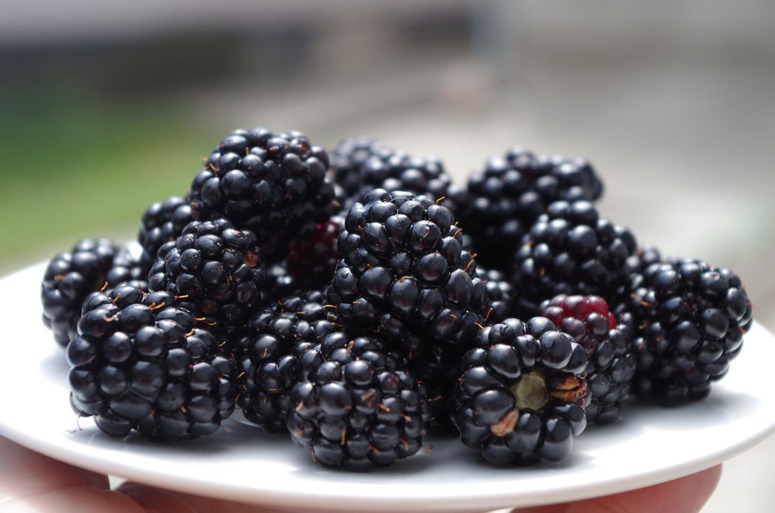 blackberries-1045728_1920