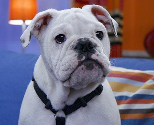 fruehstuecksfernsehen-studiohund-lotte-baby-001 - Bildquelle: Stefan Pulvermüller
