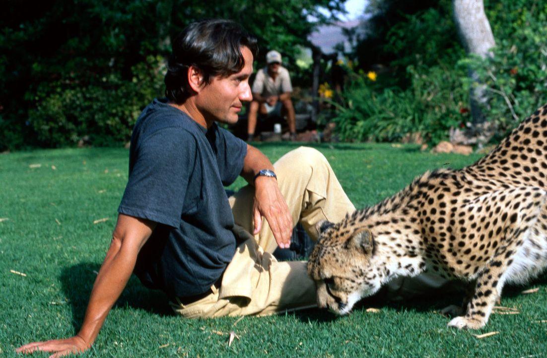 Während der Dreharbeiten auf der Farm Okonjima in Namibia konnte Ulrich Reinthaller auch die einheimische Wildtiere hautnah erleben. - Bildquelle: Norbert Kuhroeber Sat.1