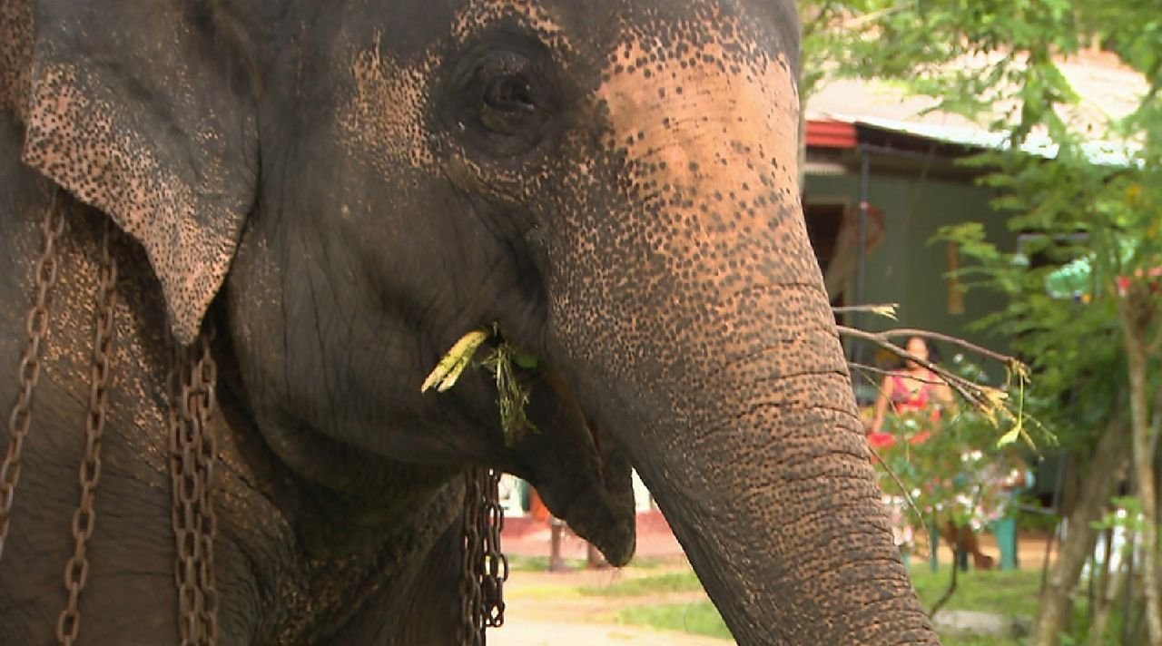 Bitte melde dich Staffel 2 Folge 1 Sri Lanka Elefant - Bildquelle: SAT.1