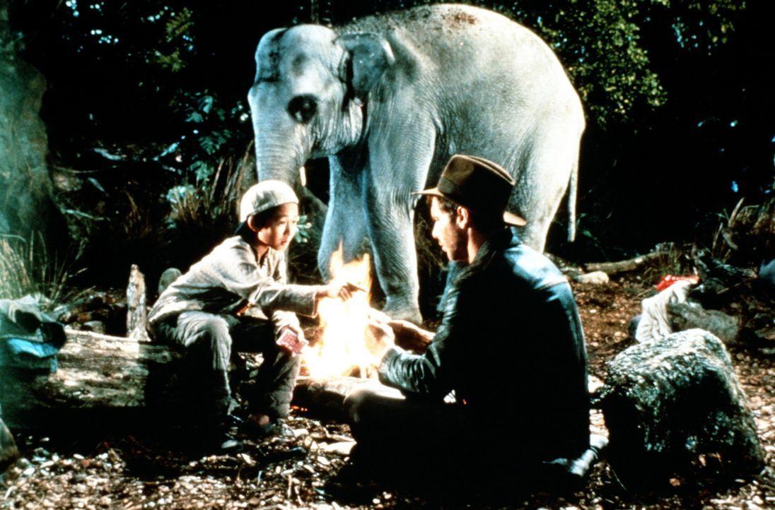 Shorty (Ke Huy Quan, l.) und Indy (Harrison Ford, r.) sind mit ihrem vier-Sterne-Nachtlager im indischen Dschungel, umgeben von Schlangen, Spinnen,... - Bildquelle: Paramount Pictures