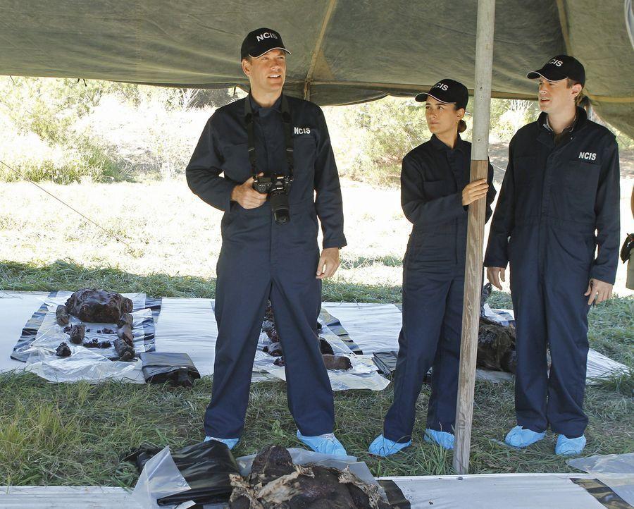 Ein neuer Fall wartet auf Tony (Michael Weatherly, l.), Ziva (Cote de Pablo, M.) und McGee (Sean Murray, r.) ... - Bildquelle: CBS Television