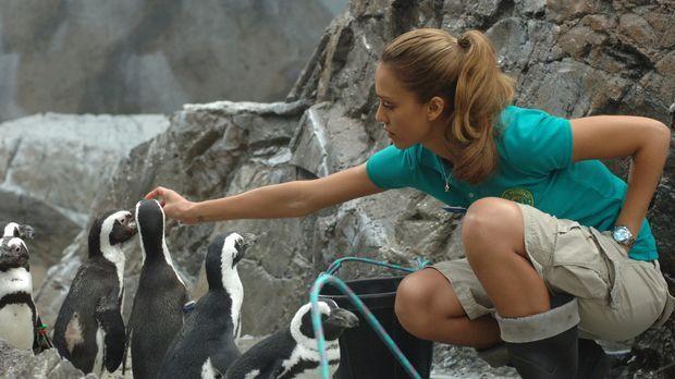Eines Tages verliebt sich die Tierpflegerin Cam (Jessica Alba) unsterblich in...