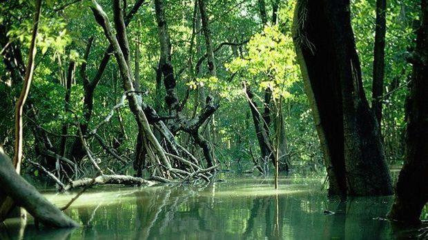 Rückgang der Mangrovenwälder