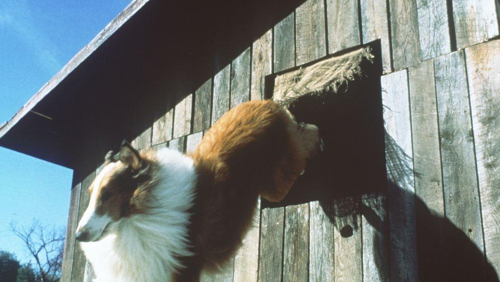 Lassie - Bildquelle: Paramount Pictures