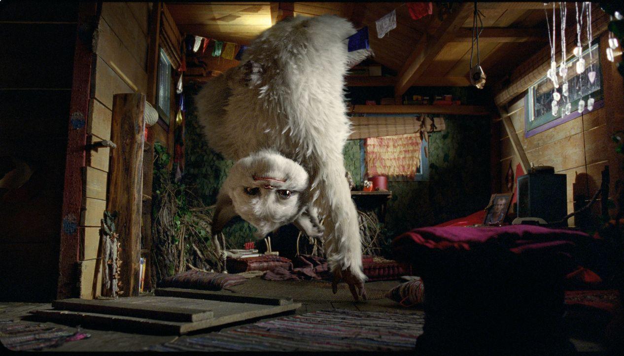 Im letzten Moment kann der Yeti Yoko dem grausamen Großwildjäger van Sneider entkommen und sich in das Baumhaus der 11-jährigen Pia retten ... - Bildquelle: Sony Pictures