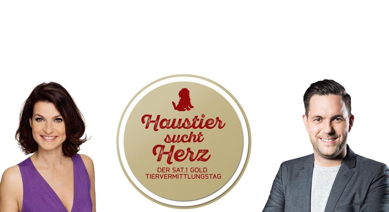Beim ersten Tiervermittlungstag live im deutschen Fernsehen sucht SAT.1 Gold für Hunde, Katzen, Meerschweinchen und Co. treusorgende Hände. Die Mode... - Bildquelle: SAT.1 Gold