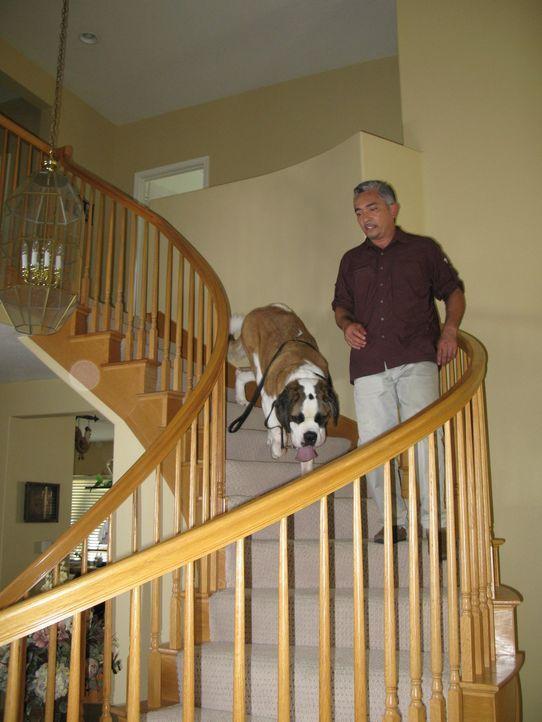 Der Hundeflüsterer Cesar Millan kümmert sich heute um einen Bernhardiner, der Angst vor Treppenstufen hat. - Bildquelle: Rive Gauche Intern. Television