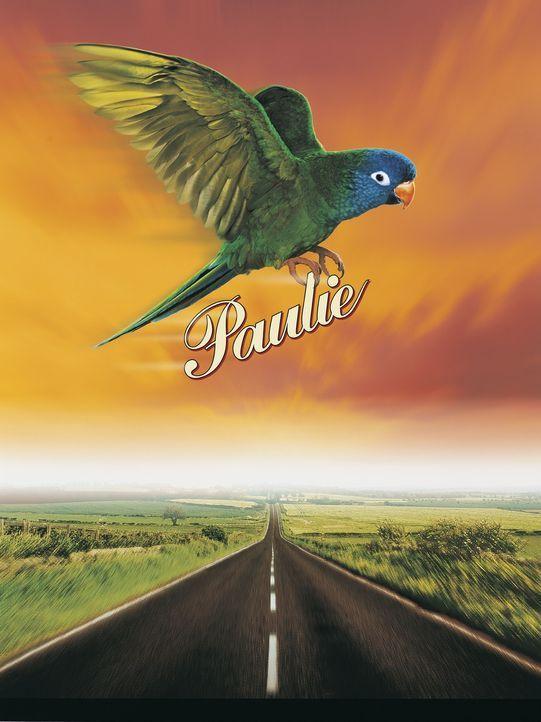 Paulie - Ein Plappermaul macht seinen Weg ... - Bildquelle: TM &   (1998) DREAMWORKS LLC. ALL RIGHTS RESERVED.