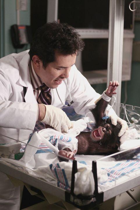 Hat einen ganz besonderen Patienten zur Behandlung: Dr. Clemente (John Leguizamo) ... - Bildquelle: Warner Bros. Television