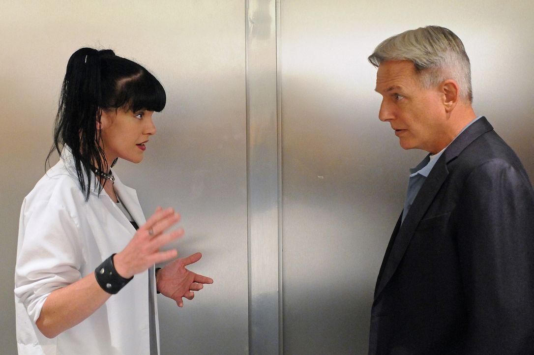 Arbeiten an einem neuen Fall: Abby (Pauley Perrette, l.) und Gibbs (Mark Harmon, r.) ... - Bildquelle: CBS Television