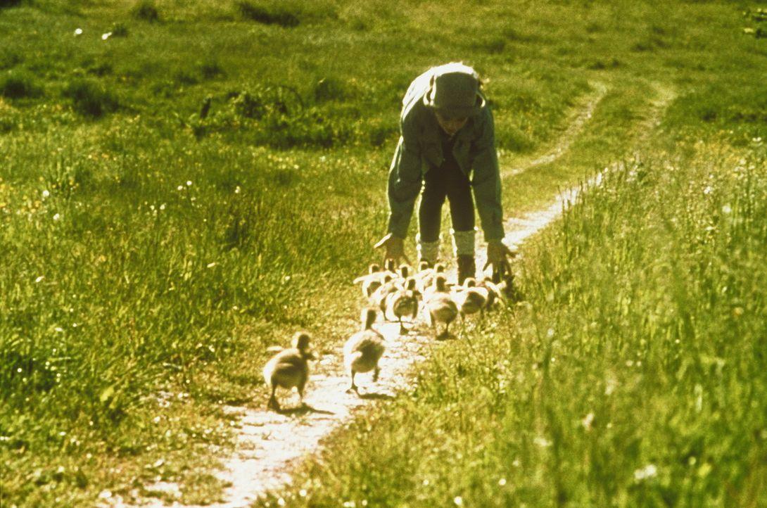 Amy (Anna Paquin) wird für die kleinen Gänse zum Mutterersatz. Sie folgen ihr auf Schritt und Tritt ... - Bildquelle: Columbia Pictures