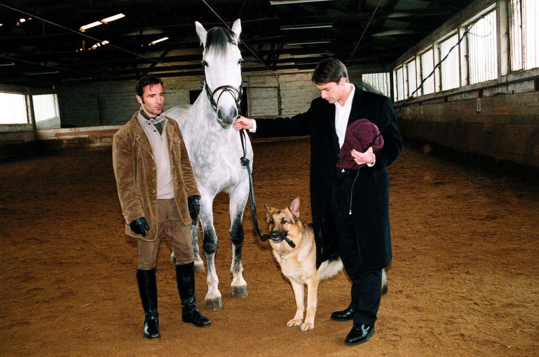 Kommissar Brandtner (Gedeon Burkhard, r.) kann mit seinem vierbeinigen Partner mehr als zufrieden sein: Auch mit Pferden kennt sich Rex bestens aus... - Bildquelle: Ali Schafler Sat.1