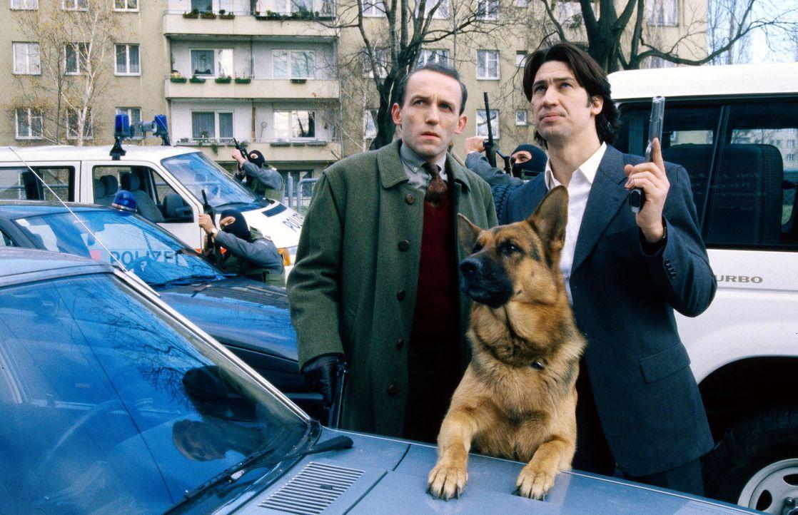 Kommissar Moser (Tobias Moretti, r.), Assistent Stockinger (Karl Markovics, l.) und Rex (M.) haben die Verfolgung der beiden flüchtigen Bankräuber a... - Bildquelle: Ali Schafler Sat.1