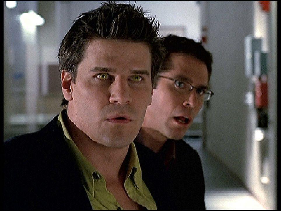 Angel (David Boreanaz, l.) und Wesley (Alexis Denisof, r.) sind verblüfft über die geheimnisvolle Kraft, die von einem Leichentuch ausgeht. - Bildquelle: TM +   2000 Twentieth Century Fox Film Corporation. All Rights Reserved.