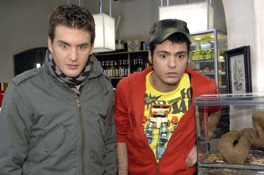 Lars (Alexander Klaws, l.) und Maik (Sebastian König, r.) beobachten überrascht, wie Consuela beim Anblick einer Schlange zu Boden geht. - Bildquelle: Claudius Pflug Sat.1