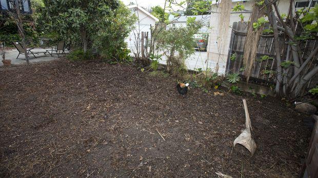 Die Künstler Kevin und Sara wünschen sich nichts mehr, als einen Garten, in d...