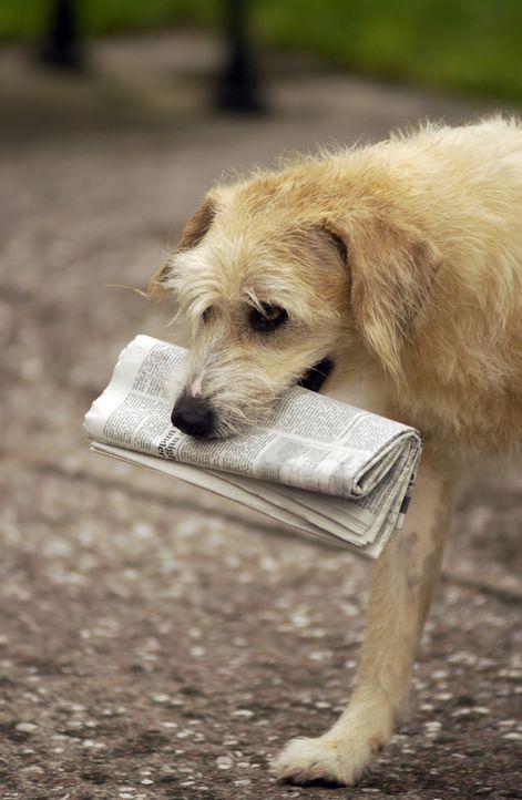 Wunderhund Lenny hat noch viel mehr drauf als nur Zeitungbringen ... - Bildquelle: North by Northwest Entertainment