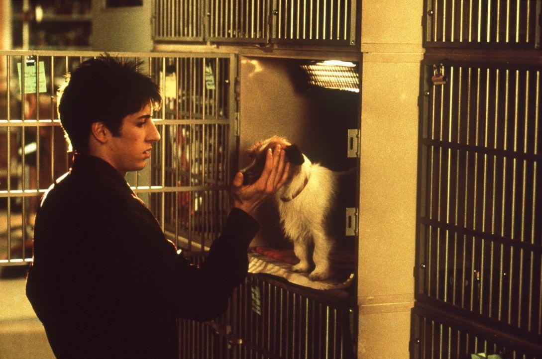 Kaum schlägt Paul (Jason Biggs) sein Lager in einer Kleintierpraxis auf, entpuppen sich seine ehemaligen Mitbewohner als seine besten Freunde. Dies... - Bildquelle: Columbia TriStar