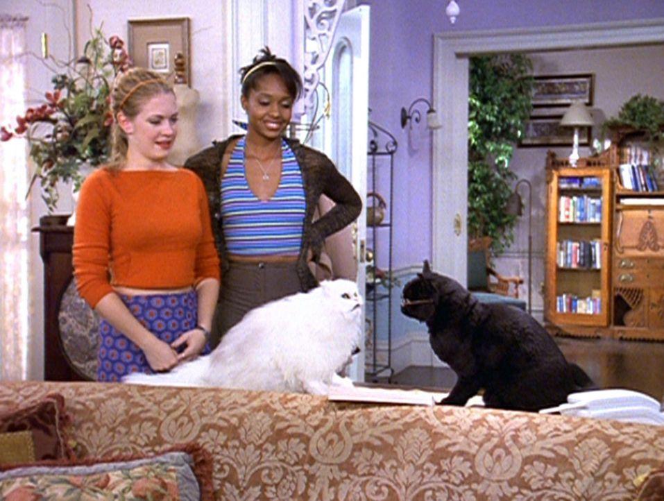 Dreama (China Jesusita Shavers, hinten r.) und Sabrina (Melissa Joan Hart, hinten l.) freuen sich, denn Salem (vorne r.) hat in Juliette (vorne l.)... - Bildquelle: Paramount Pictures