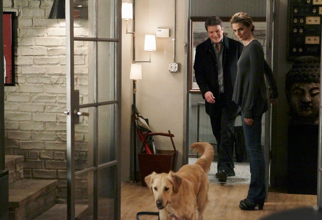 "Kann ""Royal"", der Hund des berühmten Hundetrainers, der ermordet wurde, Kate Beckett (Stana Katic, r.) und Richard Castle (Nathan Fillion, l.) zum M... - Bildquelle: ABC Studios"