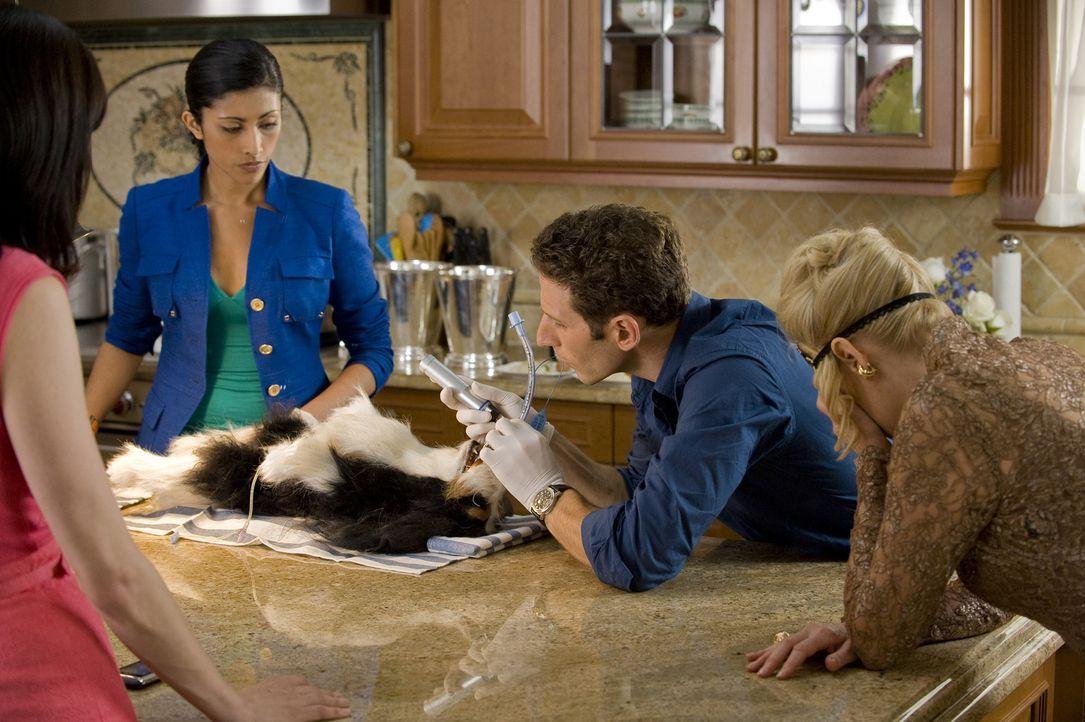 Divya (Reshma Shetty, l.) und Dr. Hank Lawson (Mark Feuerstein, 2.v.r.) untersuchen den Hund von Miss Newberg (Christine Ebersole, r.), der offensic... - Bildquelle: Universal Studios