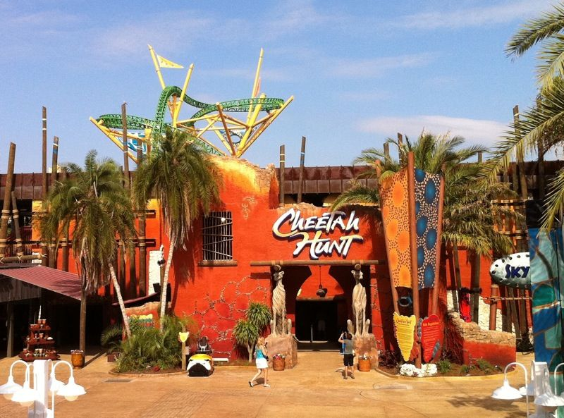 cheetah_hunt_media_00a - Bildquelle: seaworld parks & entertainment