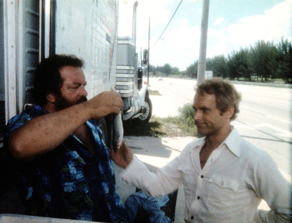 Charlie (Bud Spencer, l,) und Johnny (Terence Hill, r.) sind auf Spurensuche, doch alles was sie finden können, ist ein kleiner, stinkender Fisch ... - Bildquelle: Columbia Pictures