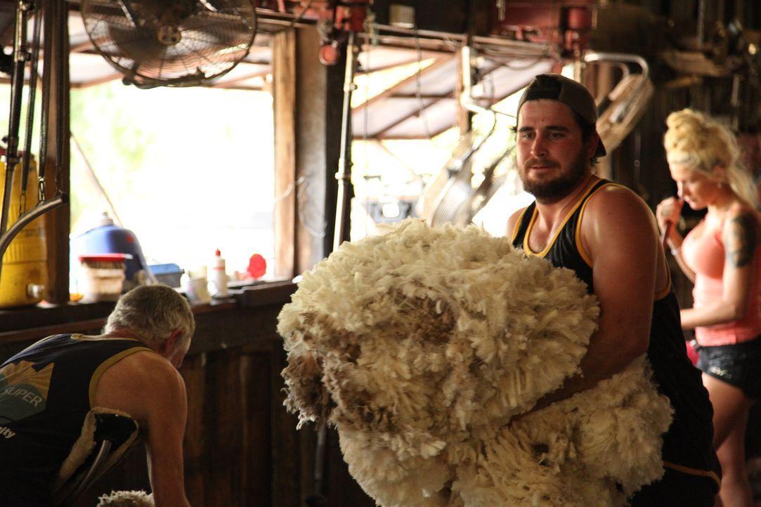 In Australien, will der arbeitslose und verschuldete Arik beweisen, dass er hart anpacken kann ... - Bildquelle: kabel eins