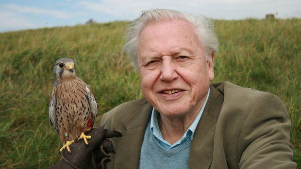 Seit 50 Jahre zeigt der britische Dokumentarfilmer Sir David Attenborough ate...