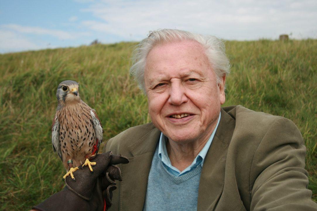 Seit 50 Jahre zeigt der britische Dokumentarfilmer Sir David Attenborough atemberaubende und intime Bilder von Wildtieren auf der ganzen Welt. Nun b... - Bildquelle: BBC 2012  All Rights Reserved